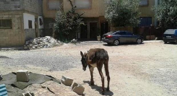 ساكنة الحي المحمدي بأكادير  تستنجد بالوالي العدوي