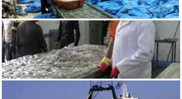 مراكب الصيد بالجر ملزمة بمغادرة المياه الجنوبية إبتداءا من فاتح شتنبر
