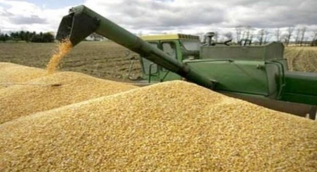 الجفاف يكلف المغرب 1100 مليار سنتيم في استيراد الحبوب
