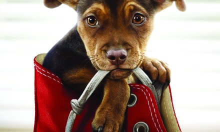 """Movie Review: """"A Dog's Way Home"""""""