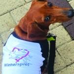 Nonprofit Feature: Wienerspiel