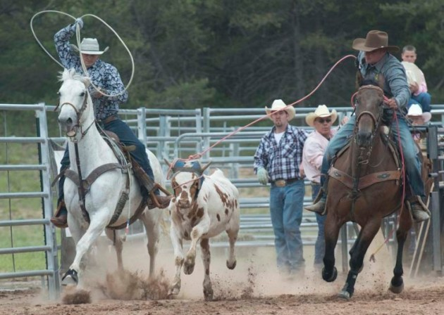 Cowboys compete toether in teams during a steer roping contest at the Great Lakes Rodeo 2014. (photo by Ron Caspi)