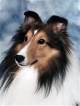 Raynor, Patricia 4311866_27620996 TP dog