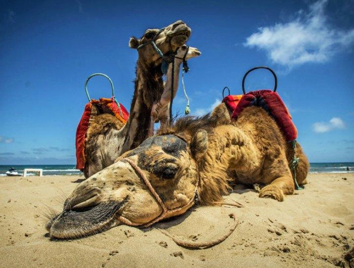 10 Motivos para viajar a Marruecos