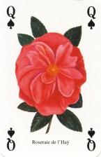 Classic Roses - Roseraie de l'Hay_wp