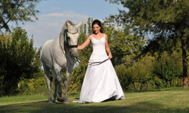 The South African Lipizzaners