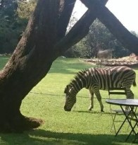 Ekudeni zebra.docx
