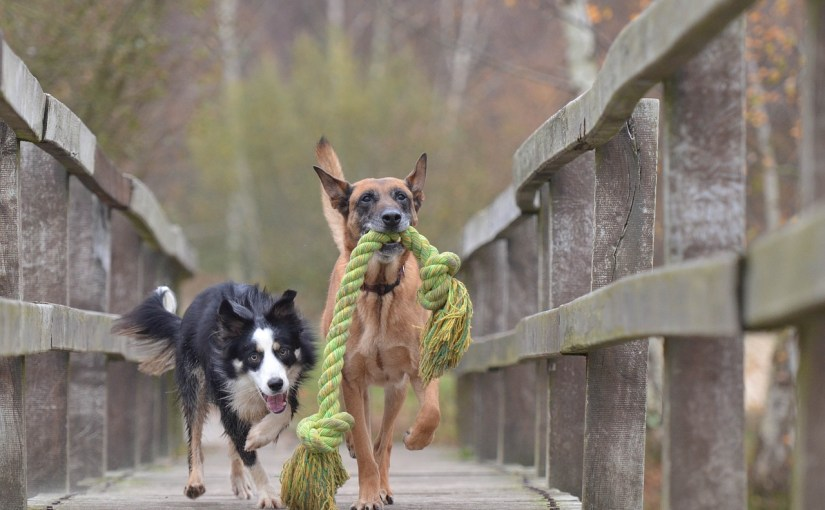 What a great pair, think of the fun you can have choosing and caring for your dog!