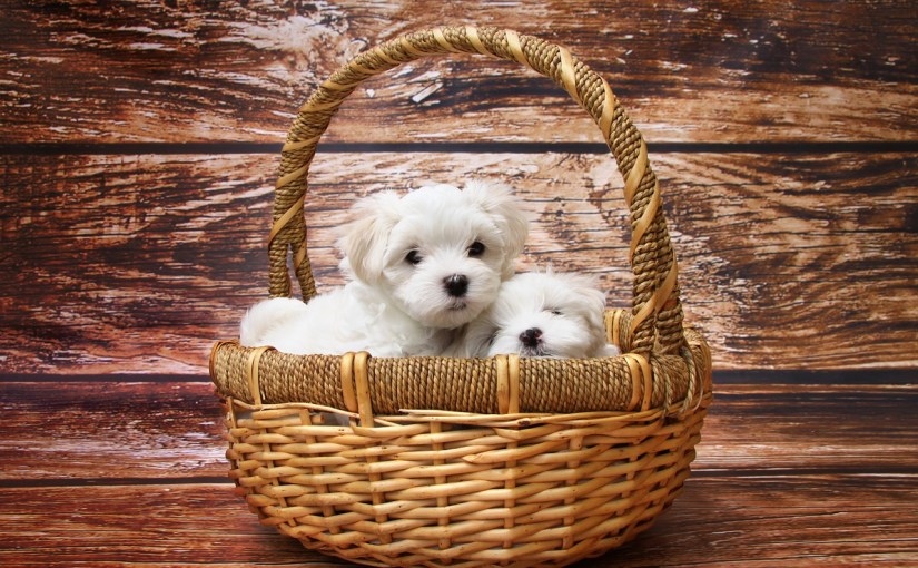 Don't you love puppies! These cuties can add a new spark in your marriage.