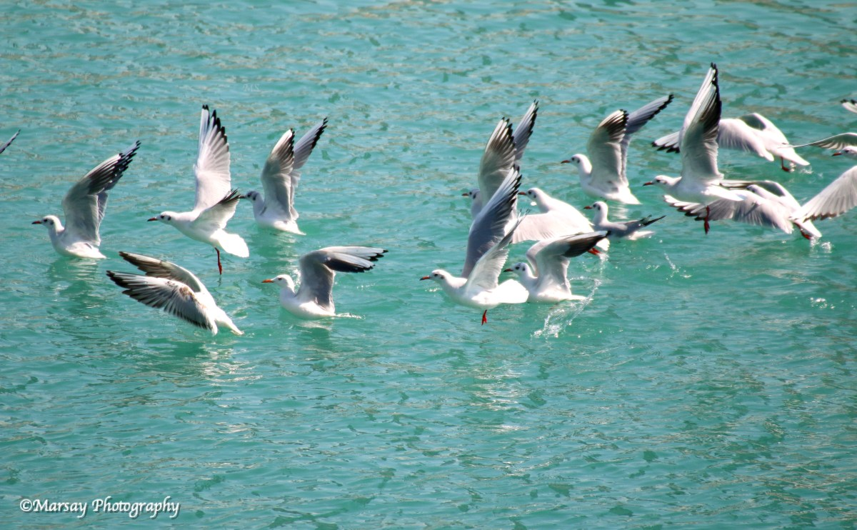 SEAGULLS-TAKING-OFF-BAHRAIN.jpg?fit=1200%2C742&ssl=1