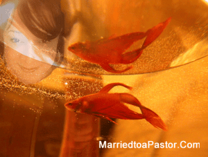 Welcome to life in the fishbowl, Pastor's Wife