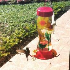 hummingbird at my dad's feeder