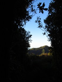 This was the view from my camp one eveing. My own little one-person camp in the middle of the bush.