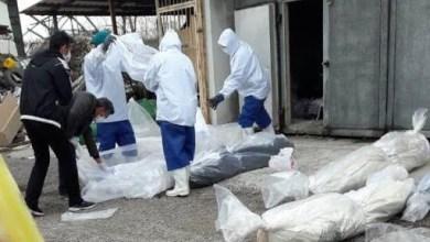 Photo of مئات الإيرانيين لقوا حتفهم إثر تناولهم علاجا مفترضا لفيروس كورونا