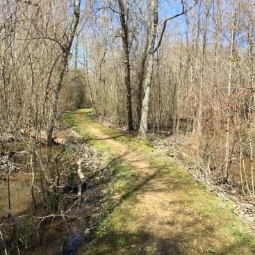Trail Through Swamp