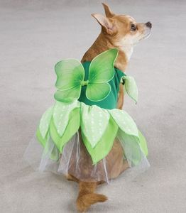 dog in a fairy costume