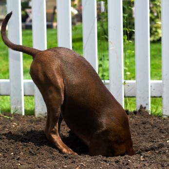 dog, fence