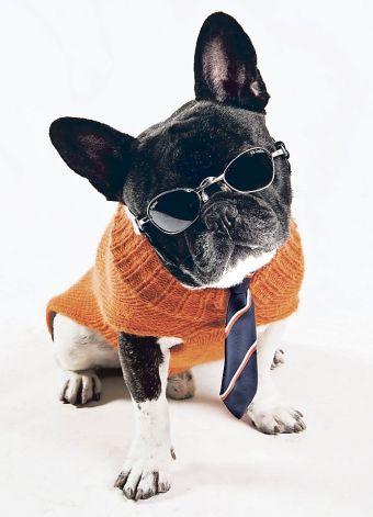 dog in orange