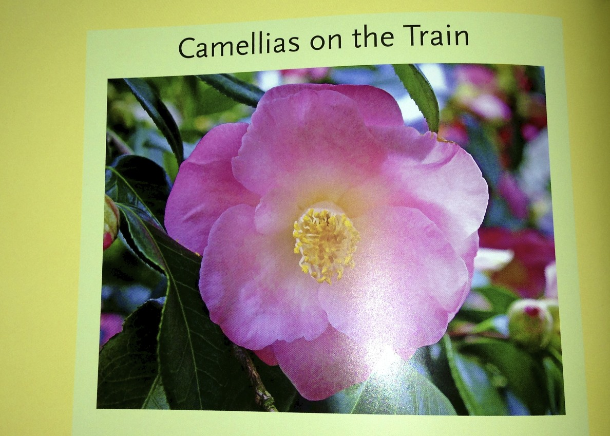 Camellias on the Train