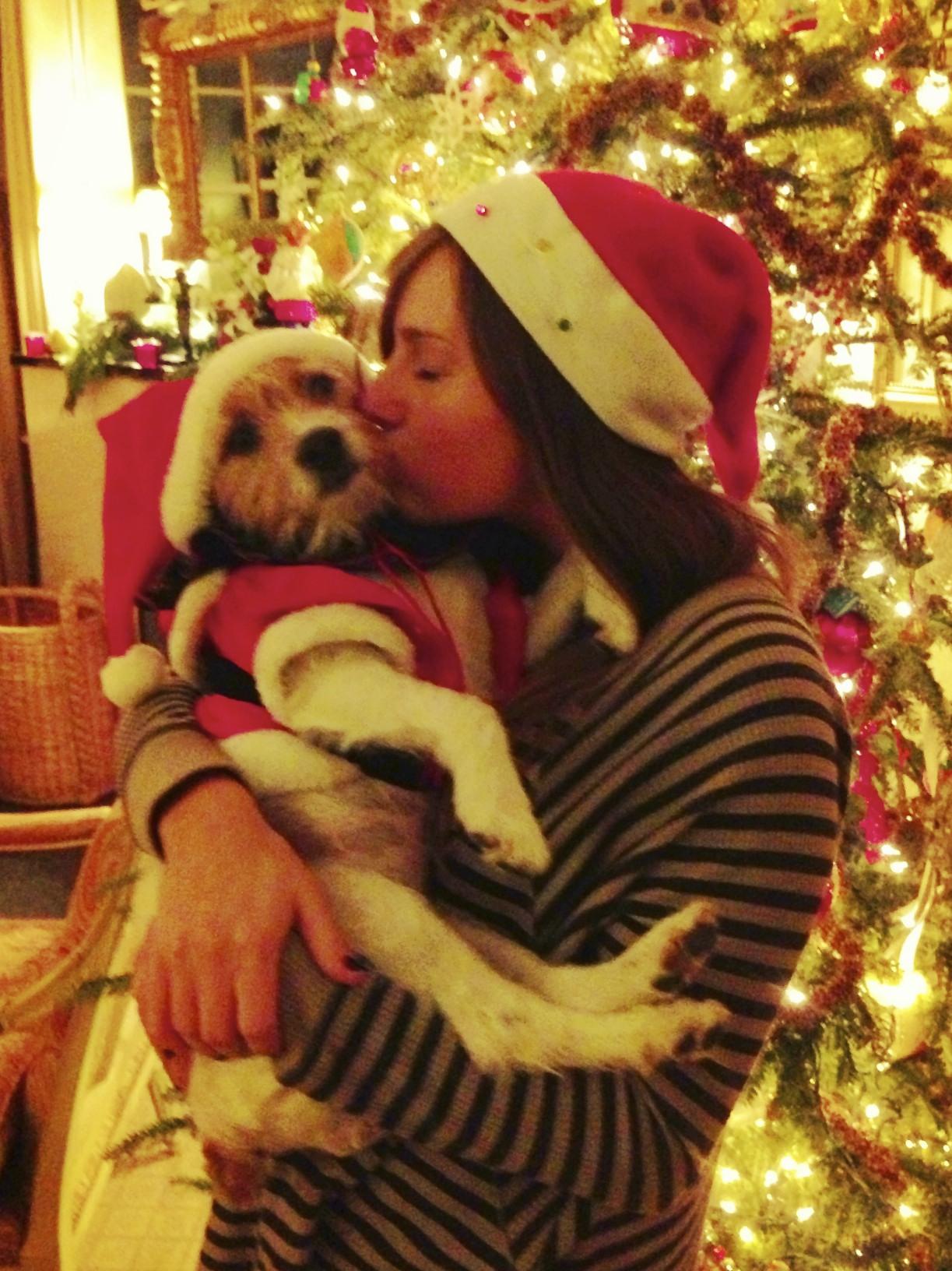 Jack Russell terrier in Santa suit