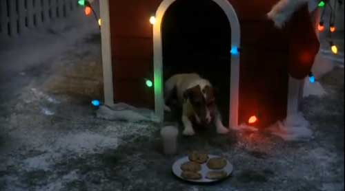 dog waits for Santa