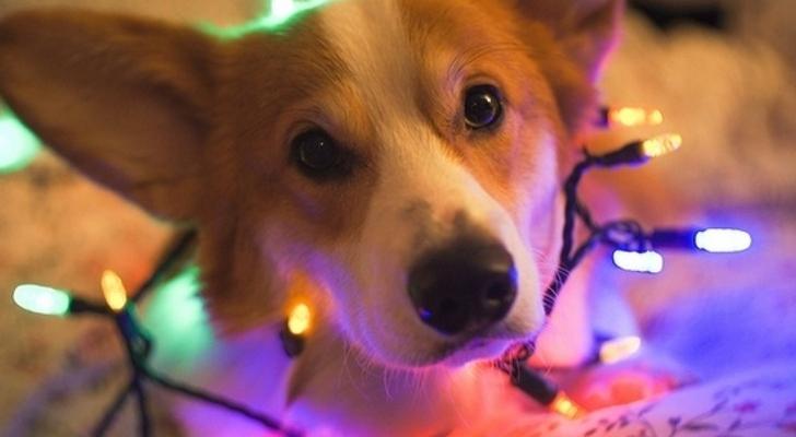 dog with lights