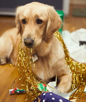 dog with wrapping paper