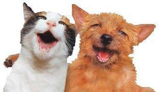 dog and cat singing