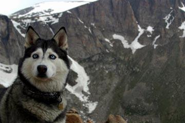 hike with dog