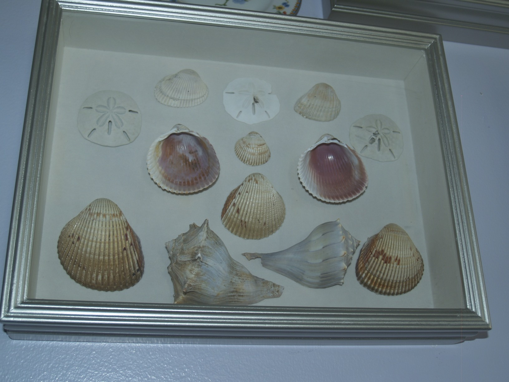 Shadow Box Shells