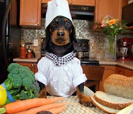 dog cooking