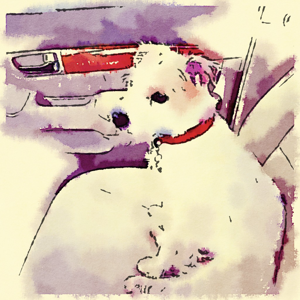 Cammie painted in waterlogue