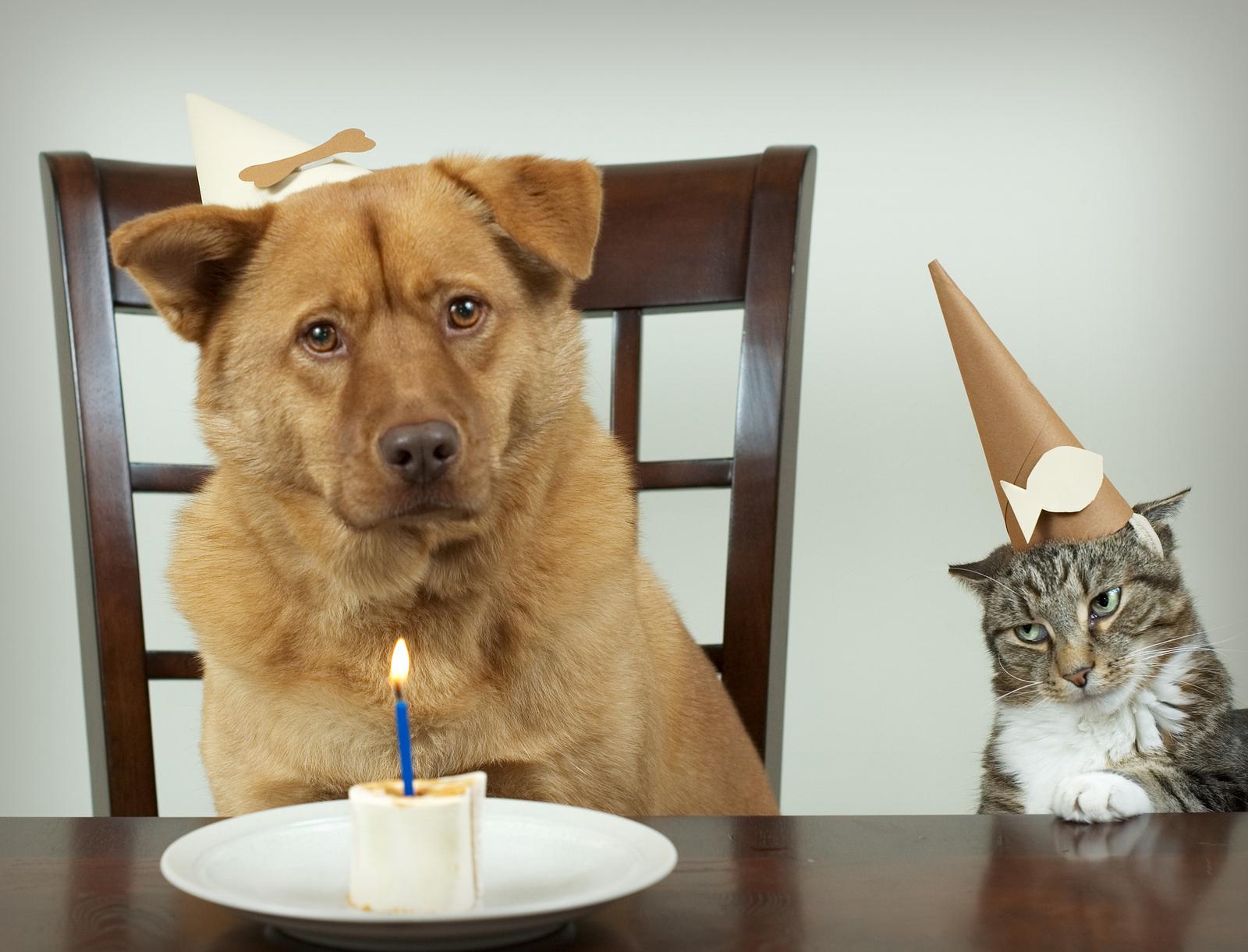 pet celebration