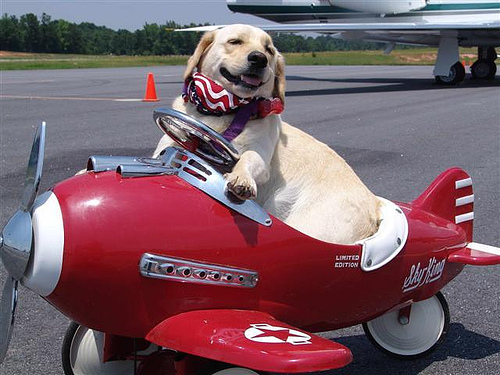 dog in red plane