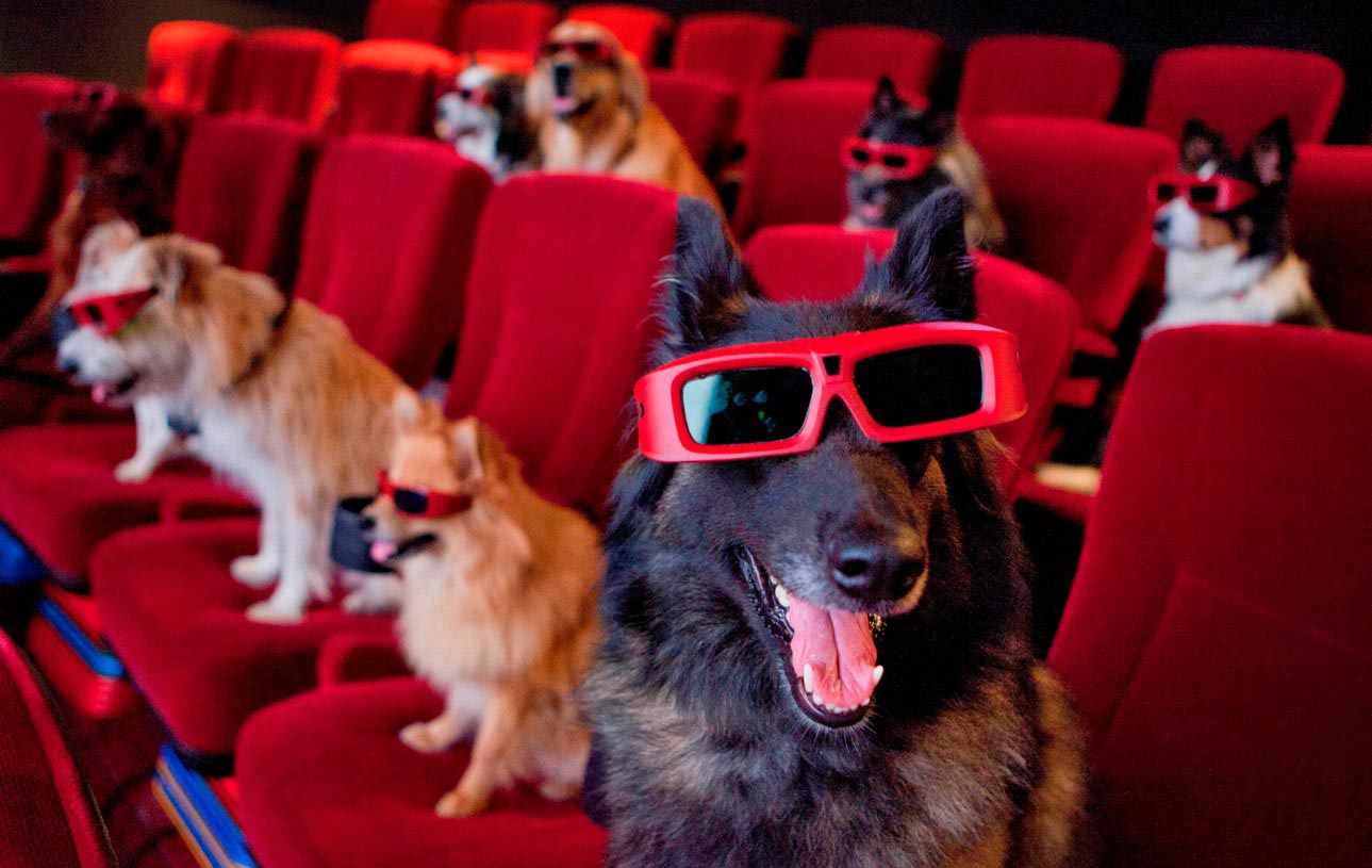 dogs in theater