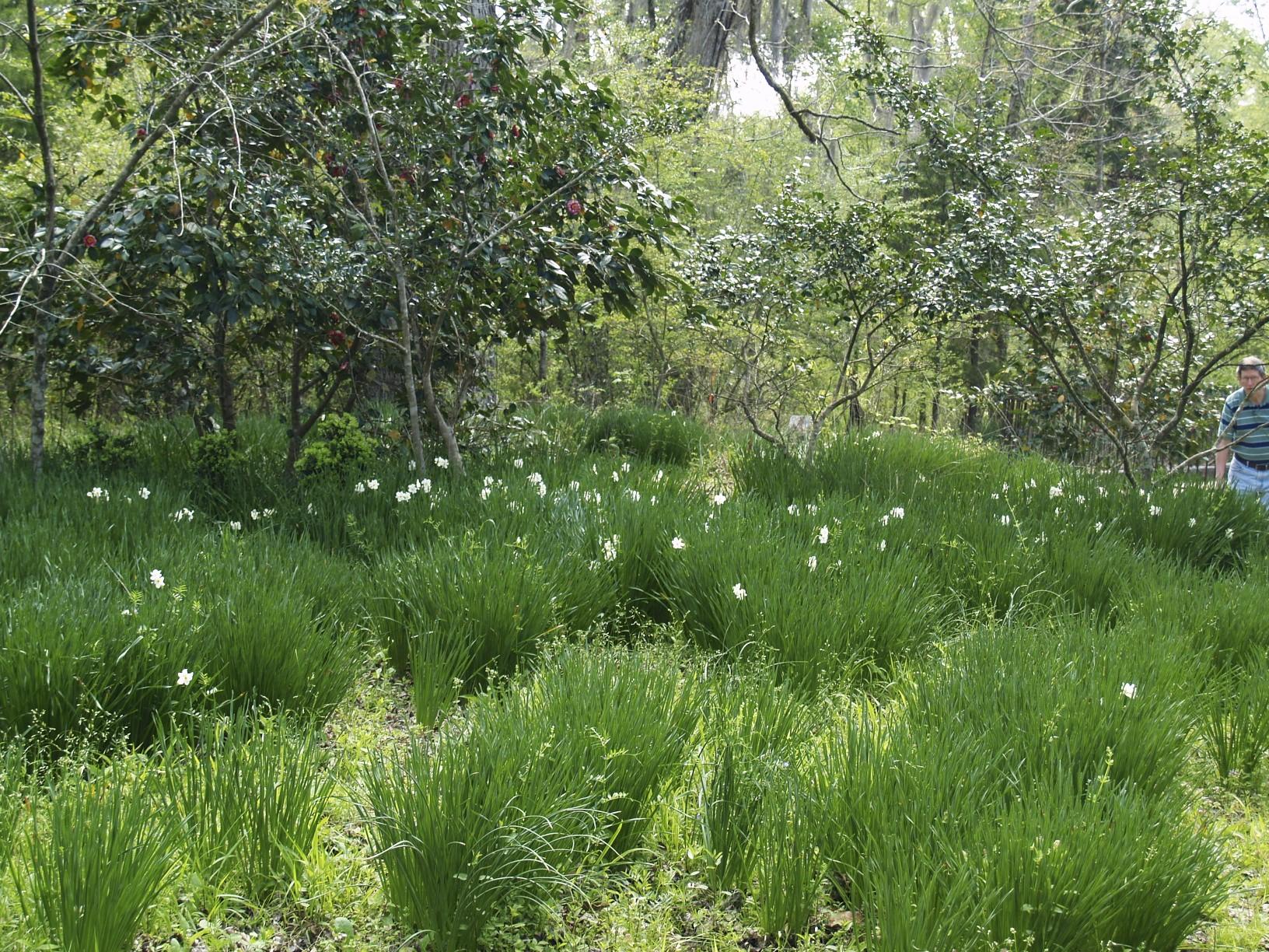 Prospect Hill Plantation