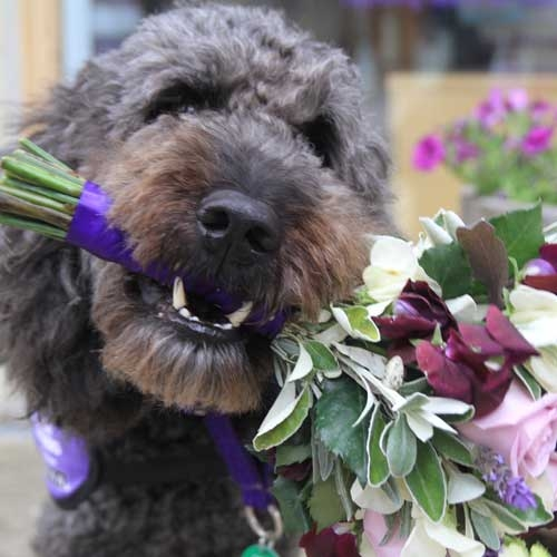 dog with bouquet