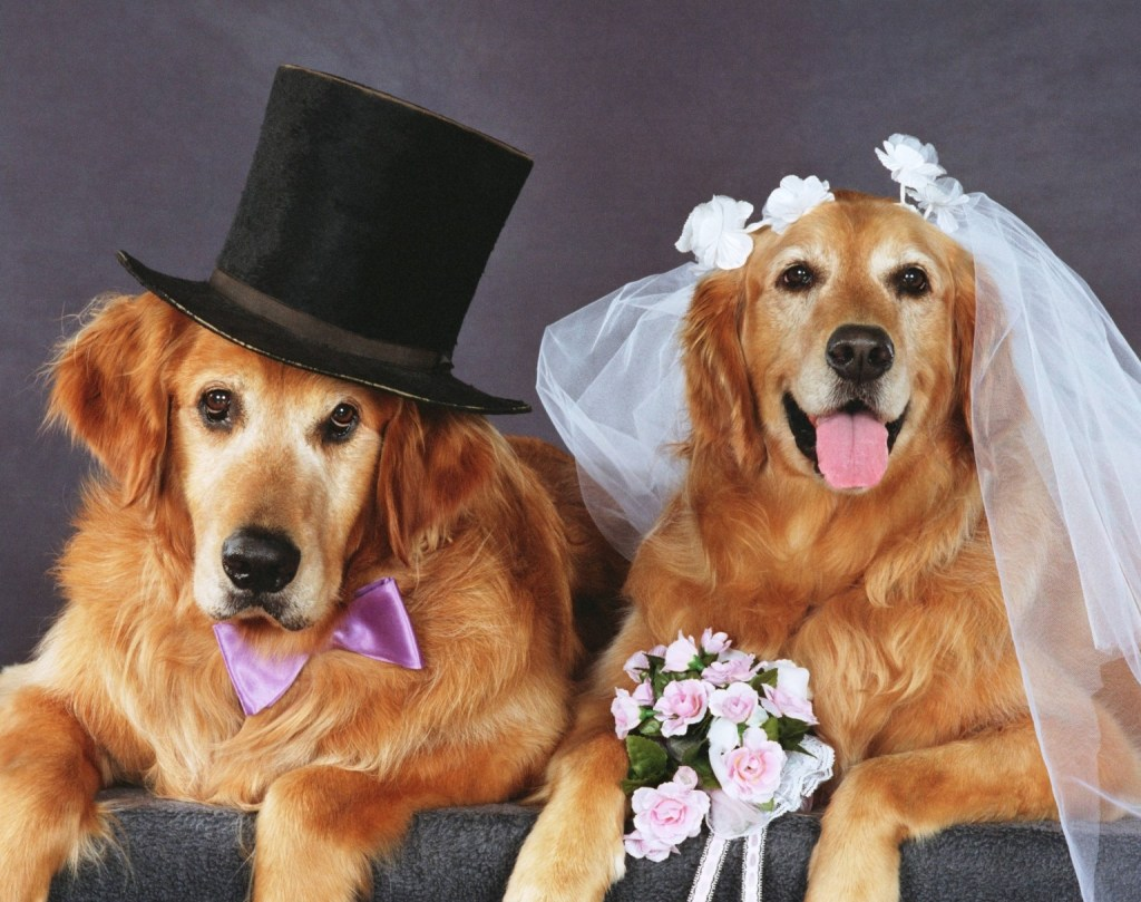 DOG-WEDDING-facebook