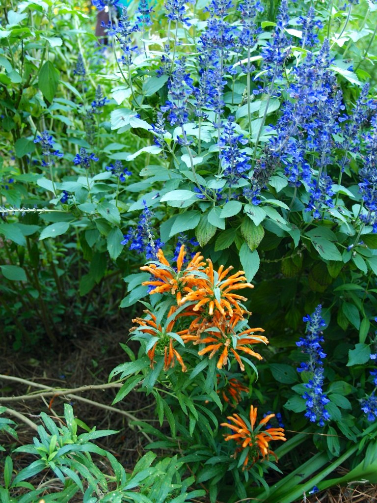 blue and orange flowers