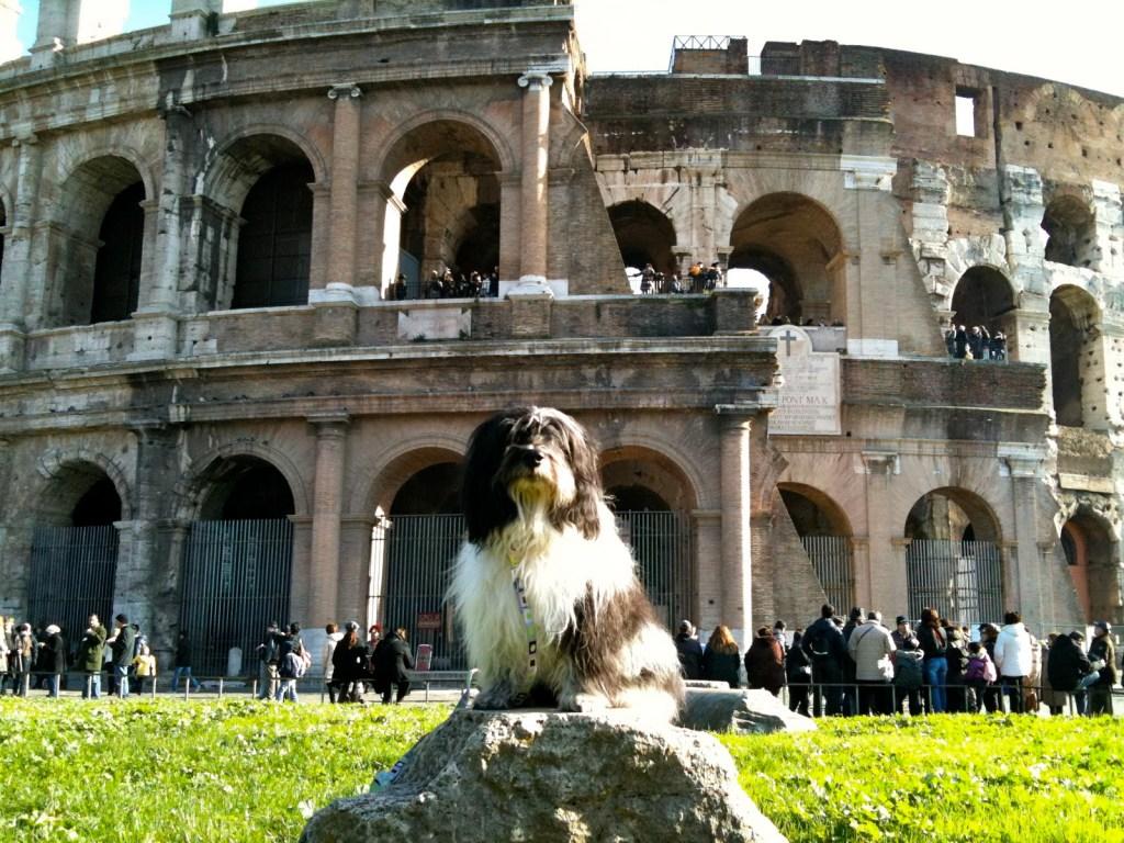 dog at colsseum