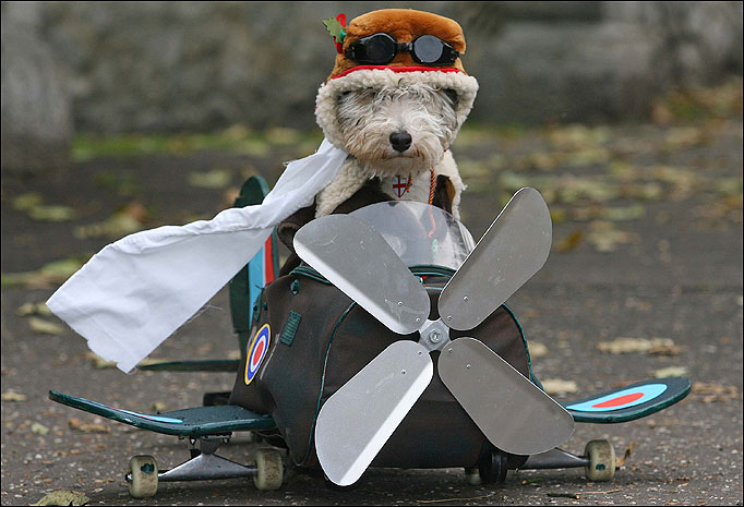 dog in a plane