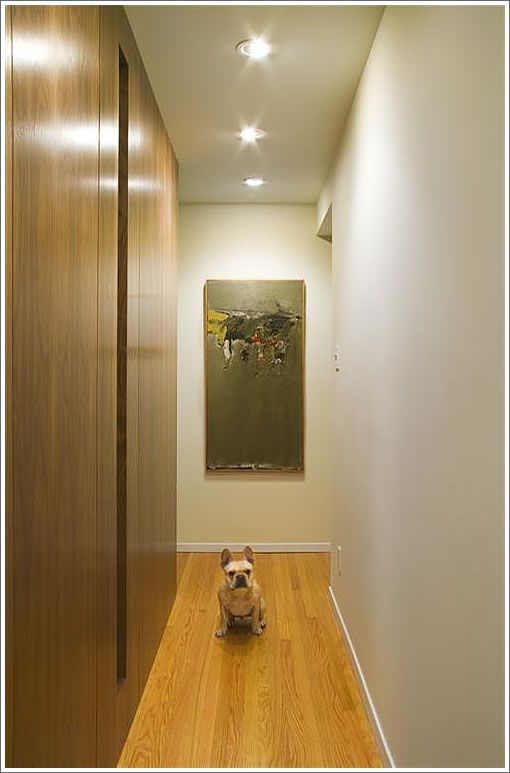 dog in hall