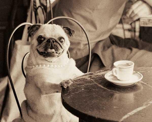 dog drinking tea