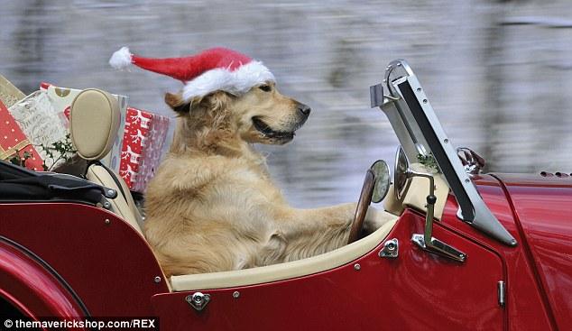 dog driving at christmas