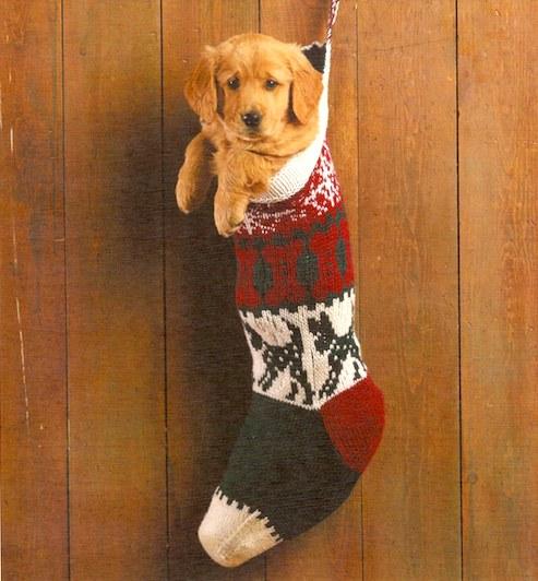 dog-stocking