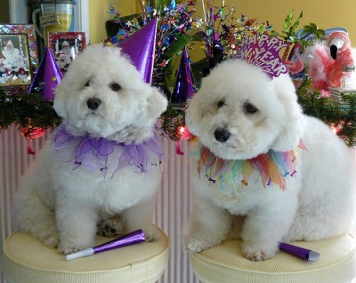 new-year-dogs-400x3191
