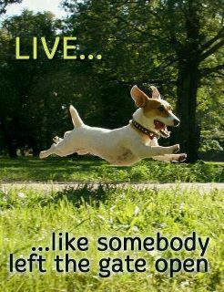 Inspirational-quote-with-dog