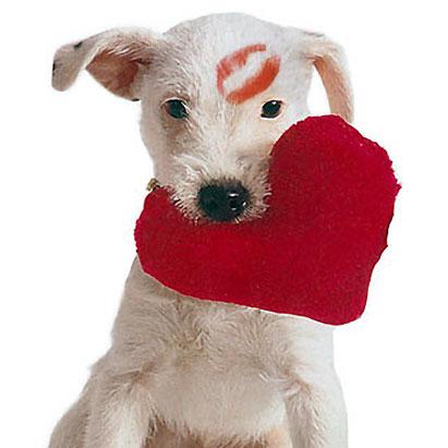 ValentineDog