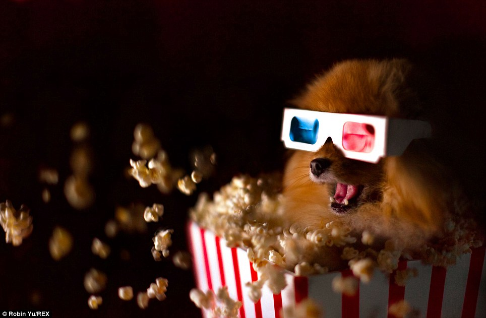 dog in movie