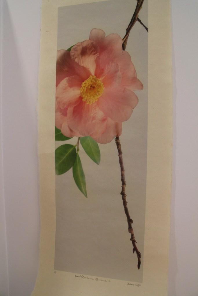 Barbara Tuffli camellia talk for the Garden Club of Jackson